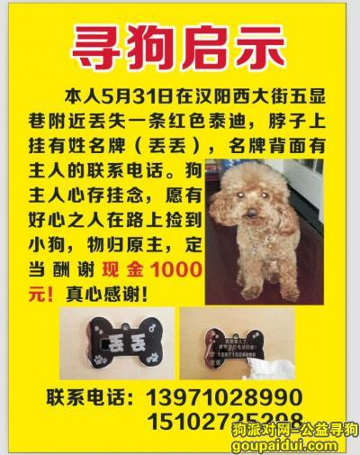 寻狗启示,寻狗启示,如有好心人捡到请归还!,它是一只非常可爱的宠物狗狗,希望它早日回家,不要变成流浪狗。