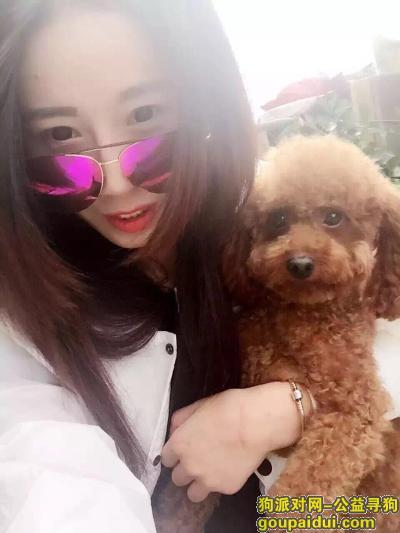 寻狗启示,北京大红门地铁寻狗启示,它是一只非常可爱的宠物狗狗,希望它早日回家,不要变成流浪狗。