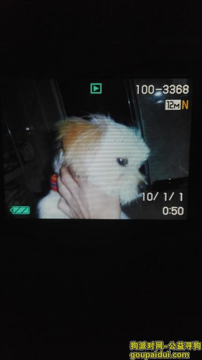 寻狗启示,在6月3日秋涛北路丢失,公狗,名叫乐乐,它是一只非常可爱的宠物狗狗,希望它早日回家,不要变成流浪狗。
