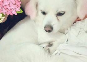 寻狗启示,寻找爱狗   6.5号下午不见了  请好心人多多留意     见者请联系15052693371,它是一只非常可爱的宠物狗狗,希望它早日回家,不要变成流浪狗。