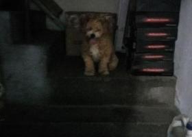 寻狗启示,在张庄路附近捡到一只狗狗!有丢的速来领啊!,它是一只非常可爱的宠物狗狗,希望它早日回家,不要变成流浪狗。