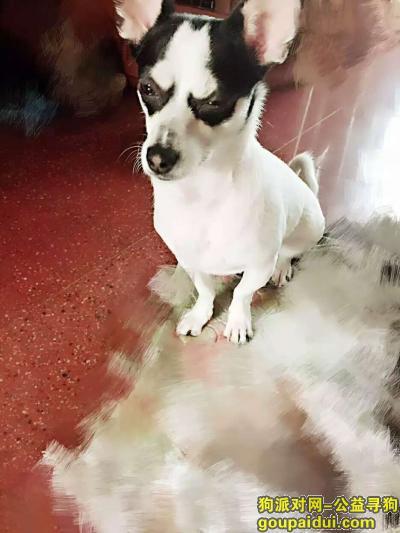 伊春寻狗网,伊春市伊春区六月四号下午三点走丢狗狗名字猫猫,它是一只非常可爱的宠物狗狗,希望它早日回家,不要变成流浪狗。