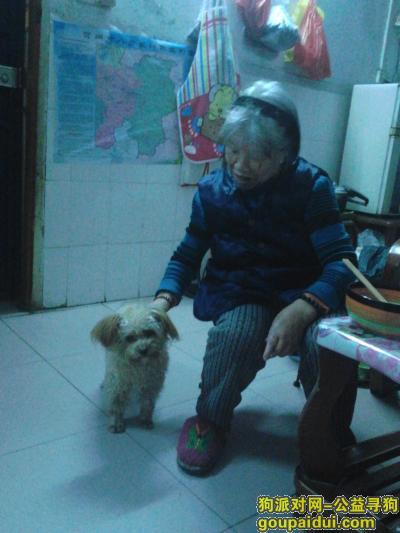 贺州找狗,狗狗走失家人担心哭了,它是一只非常可爱的宠物狗狗,希望它早日回家,不要变成流浪狗。