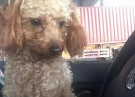寻狗启示,急寻爱宠,悬赏3000,它是一只非常可爱的宠物狗狗,希望它早日回家,不要变成流浪狗。