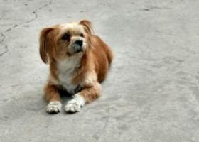 寻狗启示,捡到一只狗(太原森林公园),它是一只非常可爱的宠物狗狗,希望它早日回家,不要变成流浪狗。