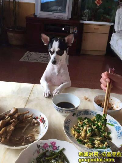 伊春找狗,寻狗黑龙江省伊春市伊春区6月4日狗狗丢失狗名字猫猫,它是一只非常可爱的宠物狗狗,希望它早日回家,不要变成流浪狗。