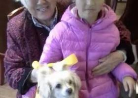 【麻村周边】急寻陪伴老人多年爱犬