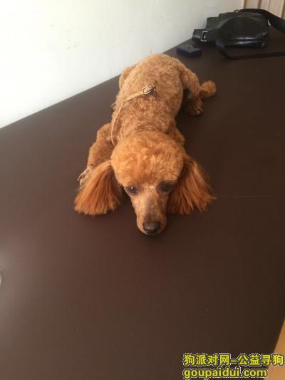 齐齐哈尔找狗,一泰迪狗于6月19日中午12点左右走失于齐齐哈尔市南山鑫苑小区,它是一只非常可爱的宠物狗狗,希望它早日回家,不要变成流浪狗。