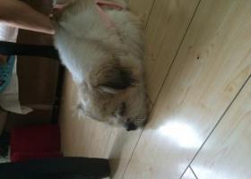 寻狗启示,8年陪伴的狗狗在外地走失求帮助,它是一只非常可爱的宠物狗狗,希望它早日回家,不要变成流浪狗。