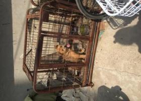 寻狗启示,6月28日早上,济南市十六里河派出所防疫站抓的狗狗,它是一只非常可爱的宠物狗狗,希望它早日回家,不要变成流浪狗。