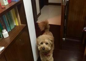 寻狗启示,4月14日 临平北沙西路 谁丢了一只狗狗,它是一只非常可爱的宠物狗狗,希望它早日回家,不要变成流浪狗。