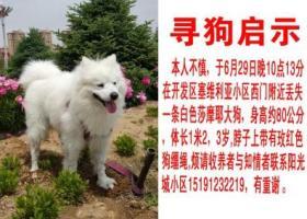 寻狗启示,陕西省榆林市开发区塞维利亚小区重金寻找萨摩,它是一只非常可爱的宠物狗狗,希望它早日回家,不要变成流浪狗。