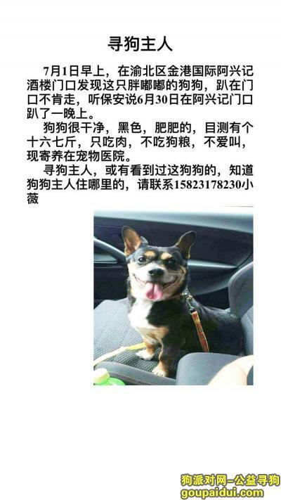 【重庆捡到狗】,为走失的狗狗寻找狗主人,它是一只非常可爱的宠物狗狗,希望它早日回家,不要变成流浪狗。