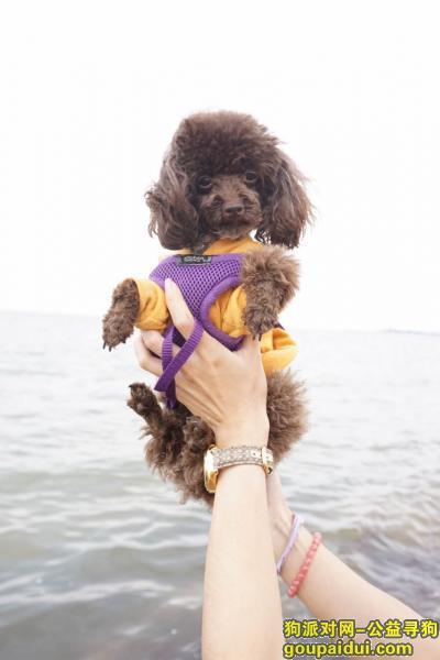 【北京找狗】,北京海淀区上庄镇馨瑞家园酬谢5千元寻找泰迪,它是一只非常可爱的宠物狗狗,希望它早日回家,不要变成流浪狗。