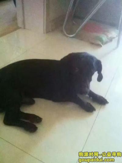齐齐哈尔寻狗启示,寻狗启示,齐齐哈尔 民航路 畅心圆附近 丢失一只小型黑犬 叫黑宝。,它是一只非常可爱的宠物狗狗,希望它早日回家,不要变成流浪狗。