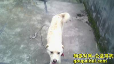 眉山寻狗启示,在四川彭山走失,找到请拨打18180052519,重金答谢,它是一只非常可爱的宠物狗狗,希望它早日回家,不要变成流浪狗。