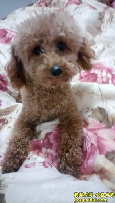 宜春找狗,在宜春御景东方附近走丢 希望狗狗赶紧回家,它是一只非常可爱的宠物狗狗,希望它早日回家,不要变成流浪狗。
