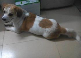 从来不走远的狗狗丢了,他的身上还有伤,我们很担心他,也很想他,希望他快点回来。
