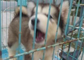 寻狗启示,七月二十五号早在崔桥加油站附近丢失,望好心人联系:13775173735.定有重谢,它是一只非常可爱的宠物狗狗,希望它早日回家,不要变成流浪狗。