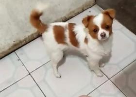 寻狗启示,酬谢5000!!6月14号走丢了,锡山区东湖塘的乡亲们,帮忙我家的花花回家!,它是一只非常可爱的宠物狗狗,希望它早日回家,不要变成流浪狗。