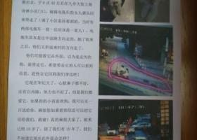 松江闵行交界  九亭大街上海诗林小区寻找比熊
