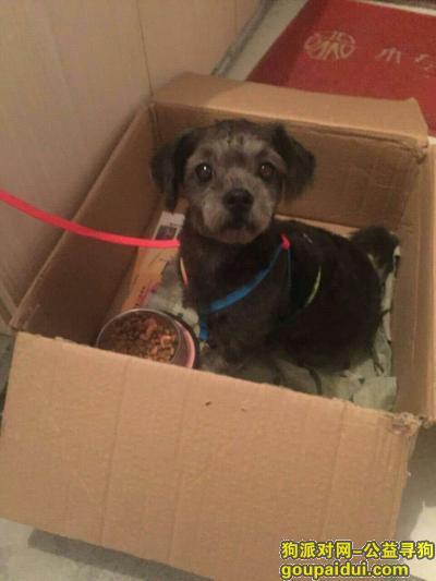 徐州捡到狗,7月29徐州捡狗徐州万达附近捡到,它是一只非常可爱的宠物狗狗,希望它早日回家,不要变成流浪狗。