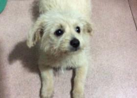 寻狗启示,我的狗狗走失在宝洲花园附近,有人看到请回复,它是一只非常可爱的宠物狗狗,希望它早日回家,不要变成流浪狗。