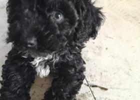 寻狗启示,东阳市五马塘十字路口走丢黑色狗狗,它是一只非常可爱的宠物狗狗,希望它早日回家,不要变成流浪狗。