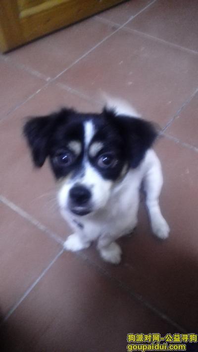 梅州找狗,求助寻狗网络平台的好心网民和爱狗人士帮助寻狗,它是一只非常可爱的宠物狗狗,希望它早日回家,不要变成流浪狗。