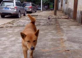 寻狗启示,请各位爱狗人士帮帮忙,它是一只非常可爱的宠物狗狗,希望它早日回家,不要变成流浪狗。