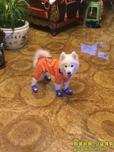 白山寻狗启示,狗狗自己跑丢了,希望大家看到了联系我,必有重谢!,它是一只非常可爱的宠物狗狗,希望它早日回家,不要变成流浪狗。