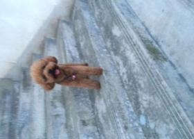 寻狗启示,重金酬谢 滨江山庄附近寻狗 望好心人提供信息,它是一只非常可爱的宠物狗狗,希望它早日回家,不要变成流浪狗。