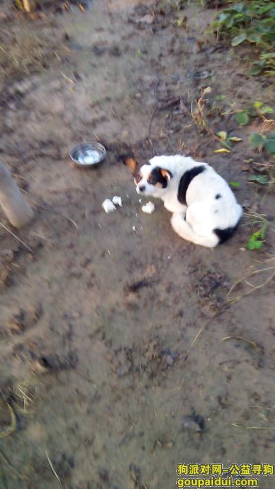 济宁找狗主人,105国道捡到一条花狗,它是一只非常可爱的宠物狗狗,希望它早日回家,不要变成流浪狗。