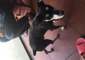 寻狗启示,8月21号早上六点在湖滨镇走失黑银色雪纳瑞。,它是一只非常可爱的宠物狗狗,希望它早日回家,不要变成流浪狗。
