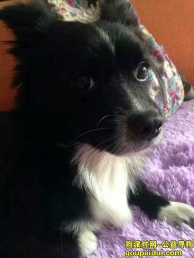 寻狗启示,寻狗启示济南市省立医院附近丢失,它是一只非常可爱的宠物狗狗,希望它早日回家,不要变成流浪狗。