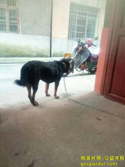 寻狗启示,我家狗狗出去一晚上都没会来,它是一只非常可爱的宠物狗狗,希望它早日回家,不要变成流浪狗。