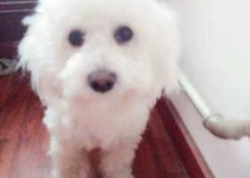 寻狗启示,狗狗丢失,急急急,,,,,它是一只非常可爱的宠物狗狗,希望它早日回家,不要变成流浪狗。