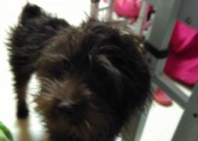 寻狗启示,谁能帮我找回狗狗,重金,谢谢,它是一只非常可爱的宠物狗狗,希望它早日回家,不要变成流浪狗。