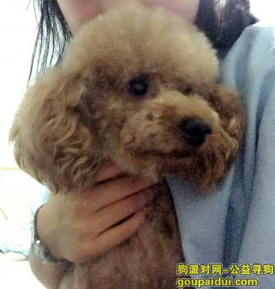 丹东找狗,寻狗狗回家,家里人都在等你回来,它是一只非常可爱的宠物狗狗,希望它早日回家,不要变成流浪狗。