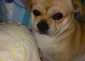 黄色的狗狗,名叫小虎!
