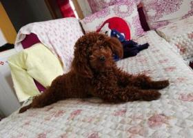 寻狗启示,宝贝你在哪里,快快回家,它是一只非常可爱的宠物狗狗,希望它早日回家,不要变成流浪狗。