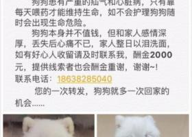 郑州寻狗,酬谢2000元~!