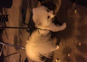 北京南三环草桥南侧公交站边上捡到一条小狗