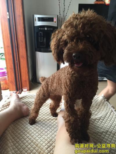 郴州寻狗网,朋友们 帮帮忙 让我宝贝早日回家,它是一只非常可爱的宠物狗狗,希望它早日回家,不要变成流浪狗。