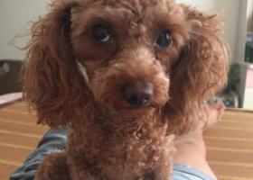 寻狗启示,咸阳寻狗 好人一生平安,它是一只非常可爱的宠物狗狗,希望它早日回家,不要变成流浪狗。