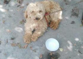 寻狗启示,*@,它是一只非常可爱的宠物狗狗,希望它早日回家,不要变成流浪狗。