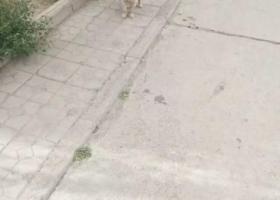寻狗启示,寻狗 金毛   有赏,它是一只非常可爱的宠物狗狗,希望它早日回家,不要变成流浪狗。