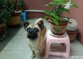 寻狗启示,寻爱犬,酬谢500元,它是一只非常可爱的宠物狗狗,希望它早日回家,不要变成流浪狗。