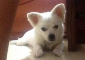 寻狗启示,在晋江市第一实验小学和晋江市第一中学之间的地方走丢。真的很急,求各位看到的帮帮忙吧。好人一生平安!!,它是一只非常可爱的宠物狗狗,希望它早日回家,不要变成流浪狗。