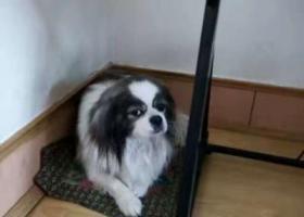 寻狗启示,黑龙江省大庆市龙凤区乙烯―宝宝,你在哪?,它是一只非常可爱的宠物狗狗,希望它早日回家,不要变成流浪狗。